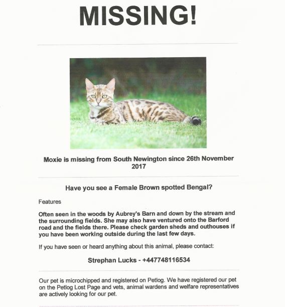 Poster for lost Bengal cat, Moxie, November 2017